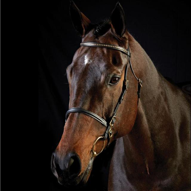 Collegiate Clincher Browband In Hand Bridle Black