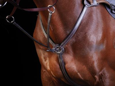 Collegiate 5 Point Breastplate Brown