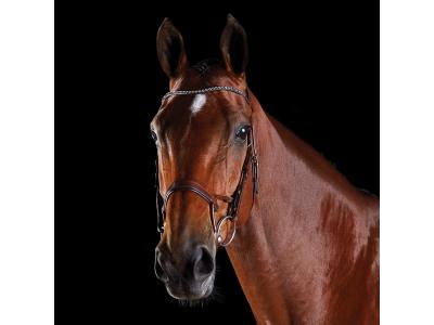 Collegiate ComFiTec Crystal Bridle Brown